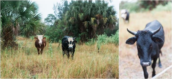 Palm-Beach-Wedding-Photographer-Swank-Farms_0025